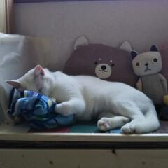 白ねこ/LIMIAペット同好会/にゃんこ同好会/至福のひととき お母さんのバック 顔うずめて寝
