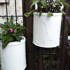庭仕事/寄せ植え/空き缶リメイク ペンキの空き缶に 植えてみました、ちゃん…