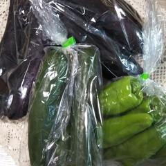 お出かけ/無人販売所/お野菜 1袋、100円‼️ このお野菜が高い時に…