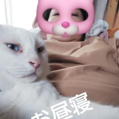 白猫/昼寝/リビングあるある/暮らし 夜勤の為、ちょっと昼寝を… ん❓️何か感…