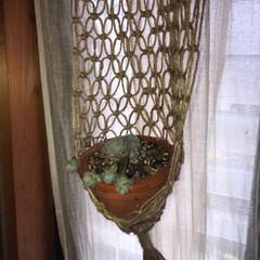 マクラメ編みタペストリー/stay home!/玄関あるある 可愛い多肉植物買ったので、久しぶりのマク…