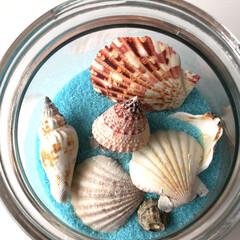 透明瓶/カラーサンド/貝殻🐚/簡単/インテリア/令和の一枚/... 玄関の飾りと色違いの飾り🌟 簡単😊透明瓶…