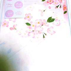 レターセット/桜🌸/手紙/春/卒業式/フォロー大歓迎/... 桜🌸のレターセット 親の宿題 卒業式に子…