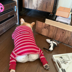 暇人/フレンチブルドッグ/ペット/犬 ママが妊娠中からトントン🔨作ったDIY✨…