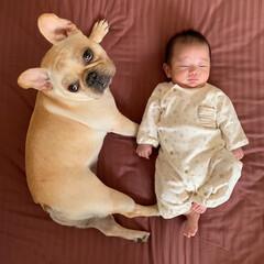 成長/赤ちゃんとの生活/赤ちゃん/癒し/ペット/犬/... 禅くん、2ヶ月❤ まだ私の方が大きいわ´…