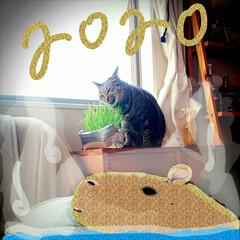 かぎしっぽ/キジトラ/猫/お正月2020/掃除グッズ 喪中につき新年のご挨拶は控えさせていただ…