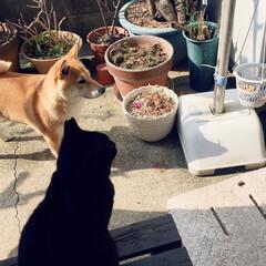 ニコちゃん/クロちゃん/おタマちゃん/柴犬/ネコ🐈/犬🐶 小さな庭に あつまりました