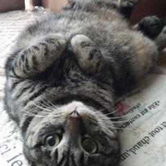 おタマちゃん/猫/にゃんこ同好会/うちの子ベストショット にゃんぱらりん