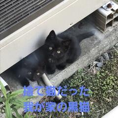 猫あるある/ベビー/里親/黒猫/猫派/令和の一枚/...