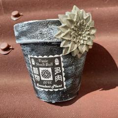 多肉植物/多肉/リメ鉢/リメイク鉢/ダイソー/100均/... リメイク鉢作って見ました ダイソーの植木…