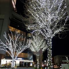 前橋/駅前/イルミネーション/フォロー大歓迎/クリスマス/旅行/... 前橋駅前のイルミネーション💡 白一色⛄️…