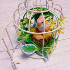 インコ/鳥/アキクサインコ/フェイクグリーン/鳥かご/レモン/... ホントは🐶と🐣を一緒に飼いたいけど、両方…