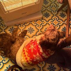 動物好きさんと繋がりたい/犬好きな人と繋がりたい/犬/ミックス犬/チワプー/フォロー大歓迎 朝は寒くて付けると、真っ先に定位置を陣取…