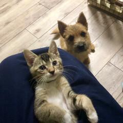 家族/赤ちゃん/ファミリー/ペット/テリア/puppy/... 新しい家族😸