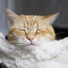 おやすみショット アゴのせが気持ちよさそうなコテツです