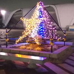 クリスマスツリー/風景 駒沢オリンピック公園中央広場の電飾と池袋…(1枚目)