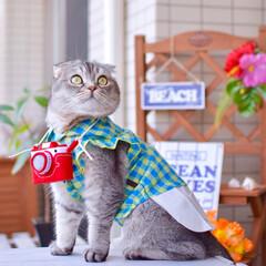 猫/スコティッシュフォールド/つぶまろ/カメラ/ニャノン/猫服 海の写真を撮りにきたニャン