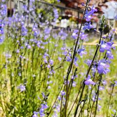 iPhone8撮影/質問/花/ガーデニング 去年お墓参りでうちのお墓で咲いてたお花。…(3枚目)