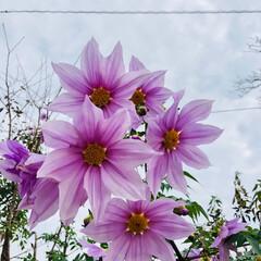 紫/質問/花/風景/秋 紫色のおっきな花!! この時期になると見…