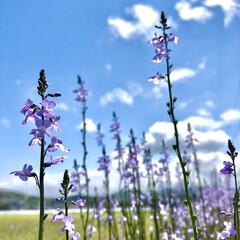 iPhone8撮影/質問/花/ガーデニング 去年お墓参りでうちのお墓で咲いてたお花。…(2枚目)