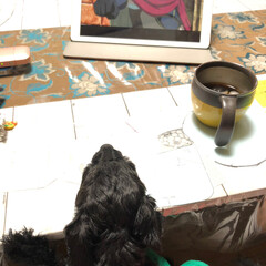 iPad/犬 みかんちゃん。 そんなに面白いかい(笑)
