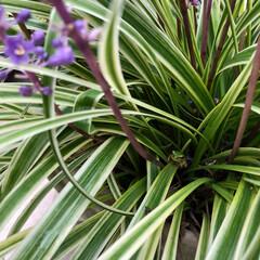庭/蝶/カエル/花 家の周りの生き物たち✨✨  写真撮りそこ…