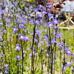 iPhone8撮影/質問/花/ガーデニング 去年お墓参りでうちのお墓で咲いてたお花。…(4枚目)