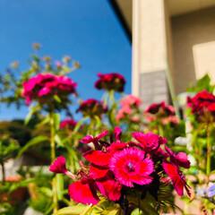カエル/ガーデニング 玄関先がいろんなお花で満開です😊✨ そし…