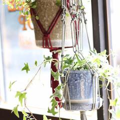 観葉植物/プラント/ハンギング/ベース/壁掛け/アイビー/... 弊社 オヘソガレージの Creative…