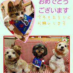 ミックス犬/保護猫/ペット/ペット仲間募集/犬/わんこ同好会/... 遡っての投稿です♪ 今年のお年賀はこんな…