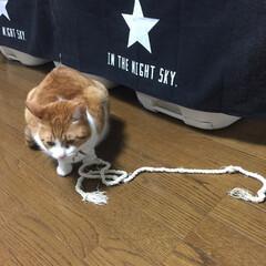 茶白猫/保護猫/LIMIAペット同好会/フォロー大歓迎/ペット/ペット仲間募集/... 😻こむぎは何故か……  このなんてことな…