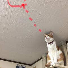 猫さんあるある/保護猫/茶白猫/ありがとう平成/令和カウントダウン/フォロー大歓迎/... 虫さん こんばんは🌙 狙われてますょーー…