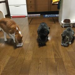 保護猫/LIMIAペット同好会/フォロー大歓迎/ペット仲間募集/猫/にゃんこ同好会/... 大好きなチュールを、無我夢中で食べてます…