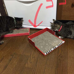 保護猫/キジトラ/茶白猫/サバトラ/ありがとう平成/令和カウントダウン/... いつも、この冷蔵庫の下の隙間に ありとあ…