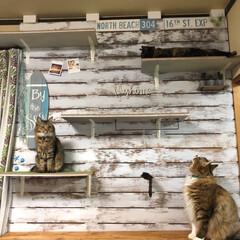 キャットウォーク/ディアウォール/2×4/1×4/ベニヤ板/保護猫/... キャットウォーク設置行ってきました〜 組…