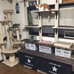 ダイソー/ディアウォール/キャットウォークDIY/はじめてフォト投稿/猫/DIY/... 猫😻3匹の為に、トイレの上にキャットウォ…