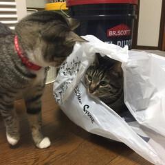 サバトラ/茶白猫/キジトラ/保護猫/LIMIAペット同好会/フォロー大歓迎/... こちらも、大好きな😻猫ちゃん多いですよね…