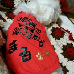 わんこ同好会 下の息子の沖縄旅行のお土産💼 マルちゃん…
