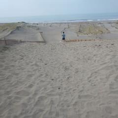 砂浜/ビーグル/LIMIAファンクラブ/LIMIAペット同好会/わんこ同好会/おでかけ 今日は早起きして海辺を散歩  ムサシ初め…