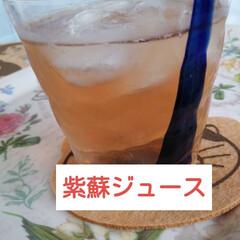 紫蘇ジュース/水分補給/簡単/青シソ/LIMIAファンクラブ/至福のひととき/... 久しぶりの投稿です😆  仕事やら忙しく過…