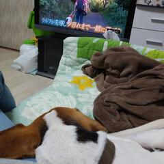 涙/盲導犬/坂上どうぶつ王国/ビーグル/住まい/暮らし/... 坂上どうぶつ王国の盲導犬引退  録画して…