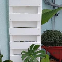 庭/ガーデニング/2×4/1×4/目隠し/フォロー大歓迎/... 目隠しを作ってみました  後ろ側にガスと…