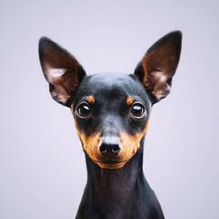 「愛犬のべべです。急に写真を とられてちょ…」(1枚目)