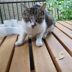 野良ちゃん/令和元年フォト投稿キャンペーン/にゃんこ同好会 毎日ご飯を食べにくる野良猫ちゃん😸  警…