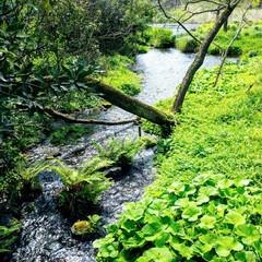 春の一枚 春の小川はさらさらいくよ
