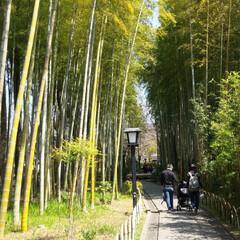 幸せ/shinobu(ママフォトグラファー)/春の一枚 春の竹林を散歩する親子が なんか幸せそう…