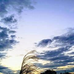 日の出直前/リミアの冬暮らし 冬の朝日を浴びるススキ🌾