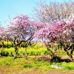 春の一枚 のどかな風景 癒やされます💮💕