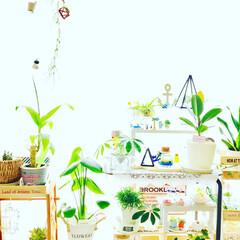 植物/100均/セリア/ダイソー 茶色のストローと麻紐でヒンメリ作りました…