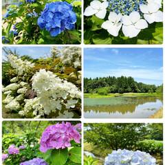 風景/紫陽花祭り/ドライブ/花/紫陽花/おでかけ  良い天気☀️来週は梅雨の天気予報☔️ド…(2枚目)